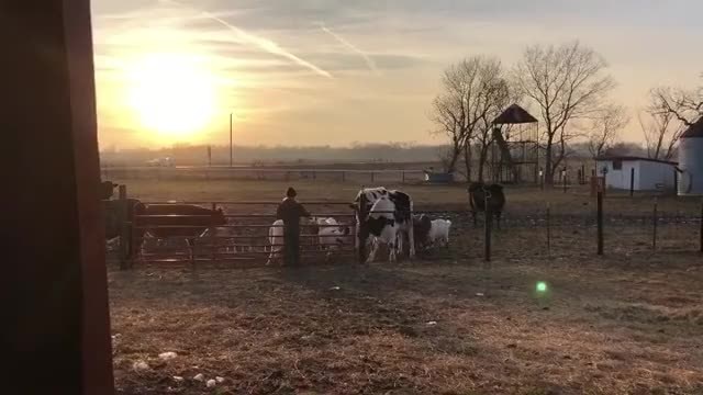 Watch and share Iowa Farm Sanctuary GIFs and Livekindly GIFs by b12ftw on Gfycat