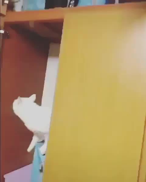 Cat slowly losing the upper body strength battle GIFs