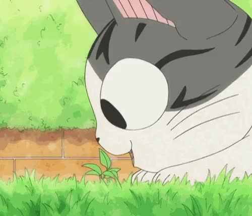Watch home sweet home GIF on Gfycat. Discover more cat, chi, chi's sweet home, kawaii, kitten GIFs on Gfycat