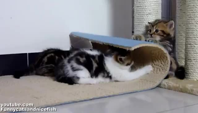 kitten, kittens GIFs