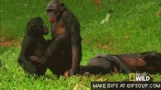 Watch and share Monkeys GIFs on Gfycat