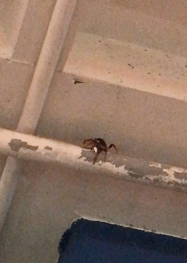 AnimalsBeingJerks, This crab is making its way down a pipe in the shop I'm working in and peeling paint off. Thanks for the mess, jerk. (reddit) GIFs