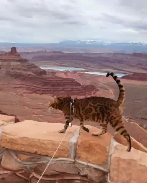 cat, cats, travel, Welcome to the Grand Canyon GIFs