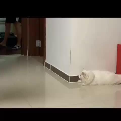 cat, cats, funny, Corner cat! GIFs