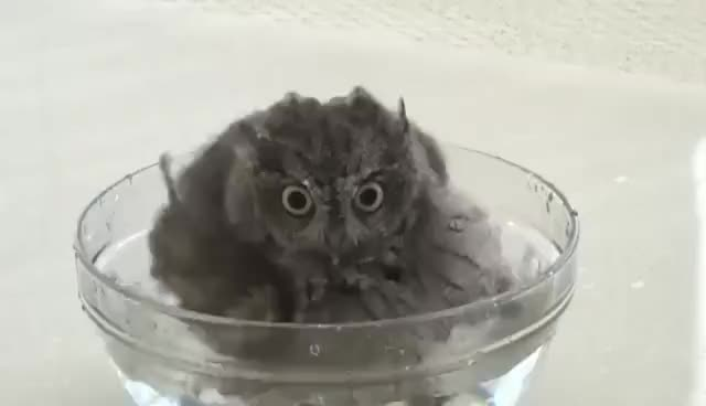 Watch OWL GIF on Gfycat. Discover more OWL GIFs on Gfycat