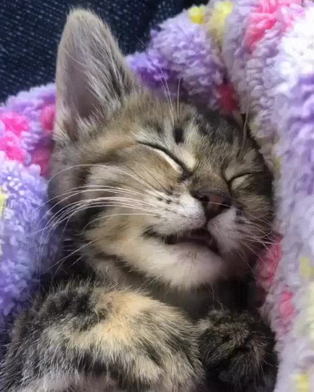 Watch and share Sleep Licking GIFs on Gfycat