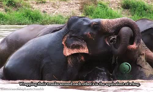 Watch and share Baby Elephant GIFs and Elephant Hug GIFs on Gfycat