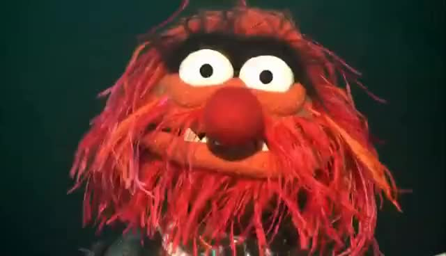 Watch animal GIF on Gfycat. Discover more Camilla, Chickens, Gonzo, Muppet, Muppets, New, Show, Studio GIFs on Gfycat