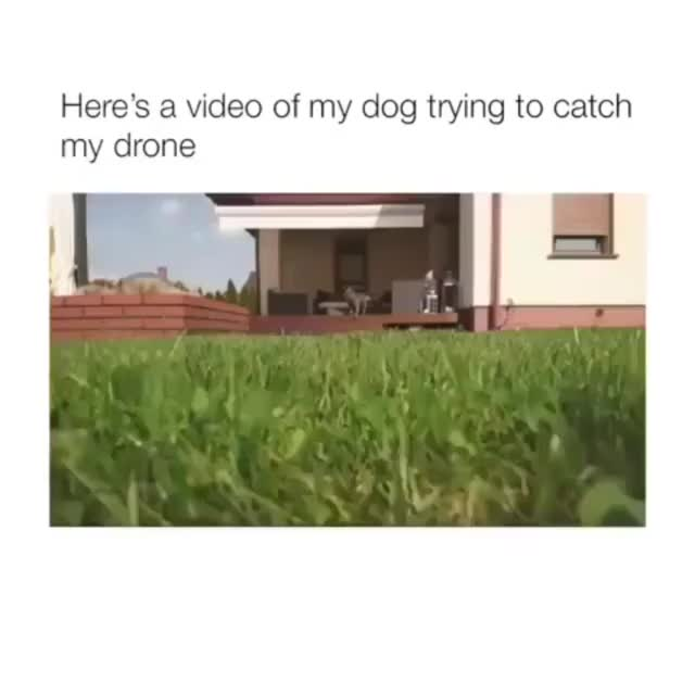 Watch Doggo vs Drone - Imgur GIF on Gfycat. Discover more related GIFs on Gfycat