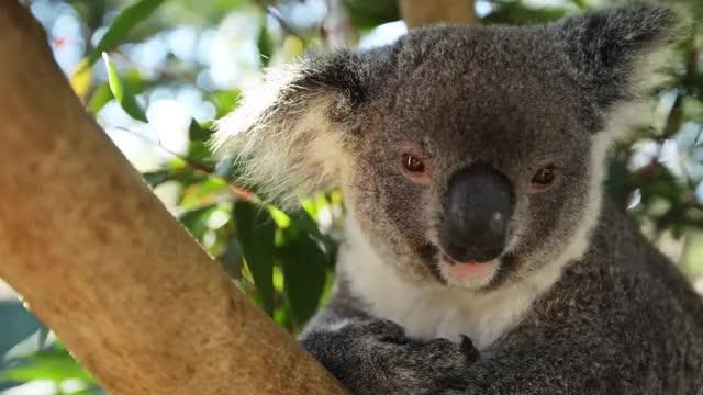 Watch and share Australia - Land Down Under In 4K DEVINSUPERTRAMP GIFs on Gfycat