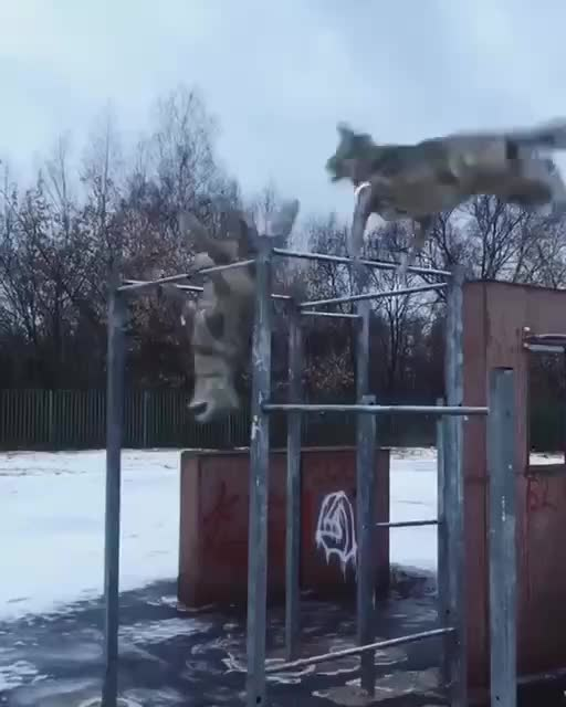 Watch and share Video 2020-02-01 16-09-34 GIFs by Alex_-✌️ on Gfycat