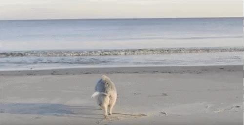 YouTube/Ziggy the Traveling Piggy