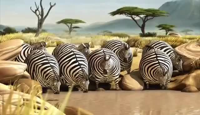 Watch and share Zebra GIFs on Gfycat