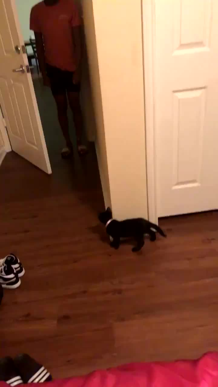awwwww, bae 💕, cats, kitten, BAE 💕 - My 8 week old kitten started doing this thing to where she will know i'm about to come in the room and she will hide by the bathroo GIFs