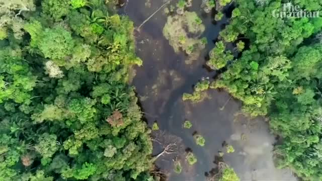 Watch and share Amazon Forest Fire GIFs and Amazon Rainforest GIFs on Gfycat