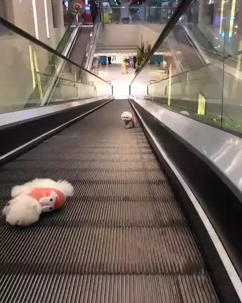 Watch and share Eye Bleach GIFs by PracticalProperty on Gfycat