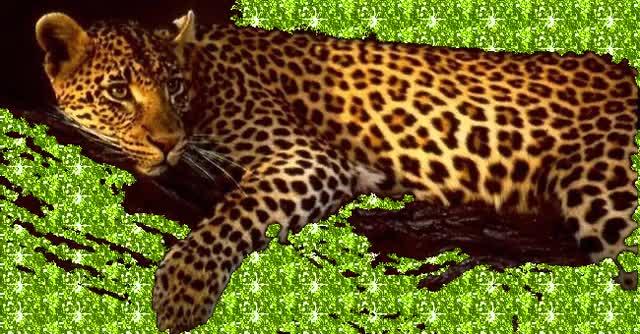 Watch and share Wild Animal Gifs GIFs on Gfycat