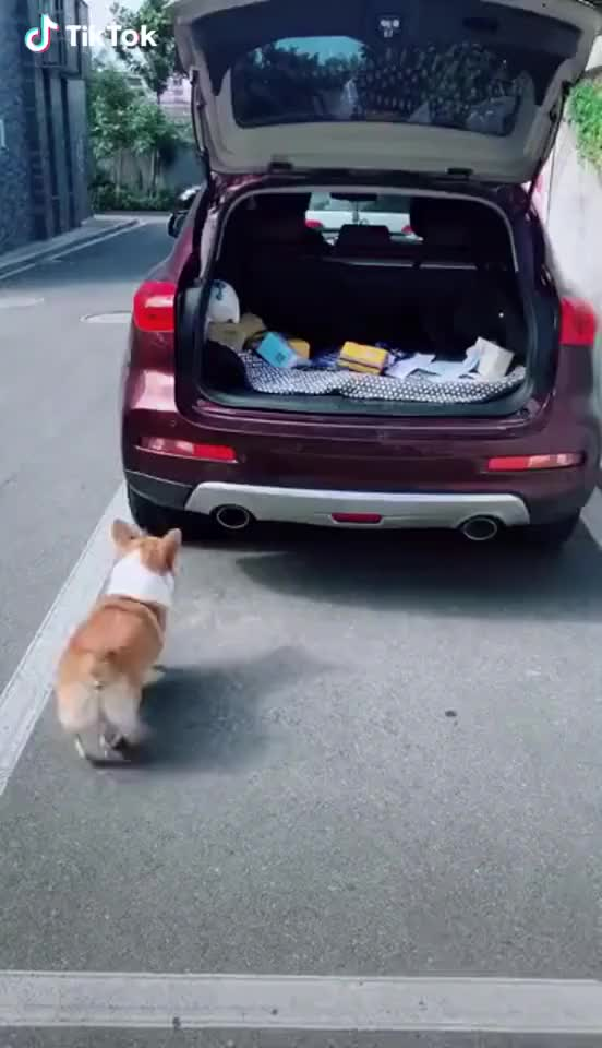 Watch and share Small Short Leg    GIFs by Funny gifs on Gfycat
