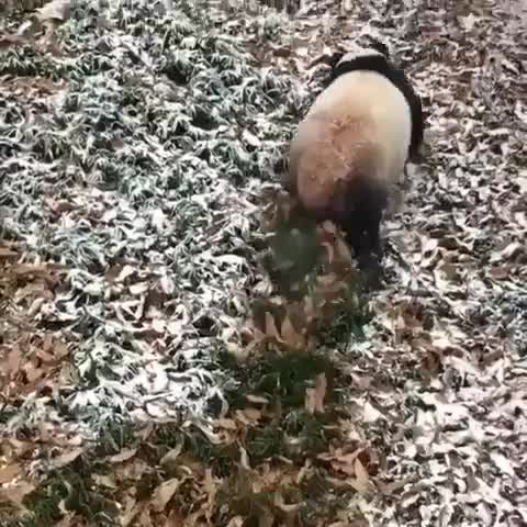 Watch and share Animalelite GIFs and Bbcearth GIFs by vani  on Gfycat
