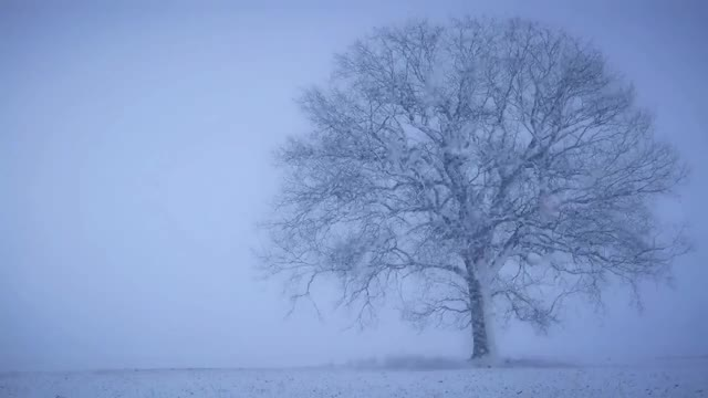 Watch SNOW fall MEDITATION relaxation music GIF on Gfycat. Discover more related GIFs on Gfycat