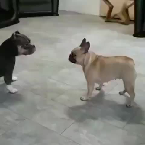 How the beginning of some MMA fights look to me (gif from r/AnimalsBeingDerps) GIFs