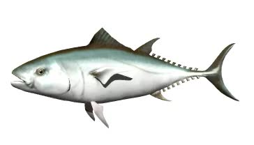 Watch and share Tuna GIFs on Gfycat