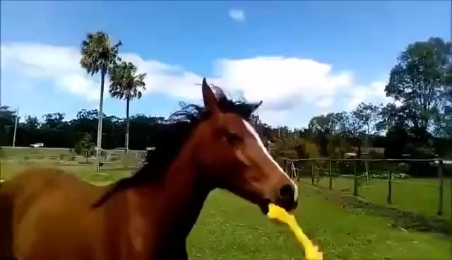 Watch and share Horse And Rubber Chicken GIFs on Gfycat