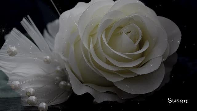 Rosa Blanca Gif By Susan At Susanlu4esm Find Make Share Gfycat Gifs