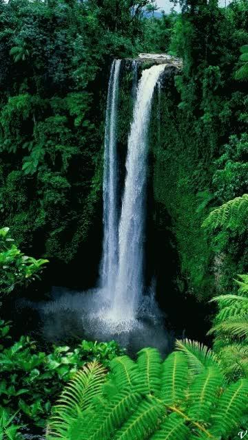 Watch and share Waterfall Lipp GIFs on Gfycat