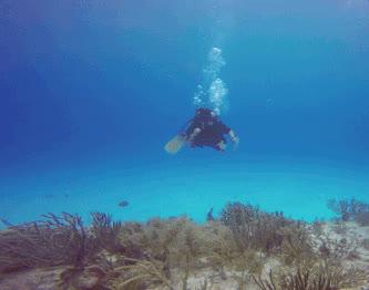scuba diving GIFs