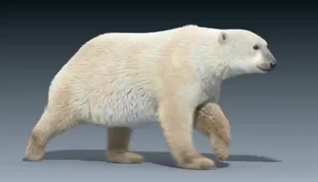 Watch and share Polar Bear Run Cycle Animation GIFs on Gfycat