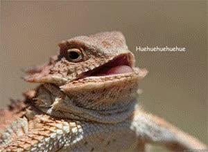 Watch and share Hue Hue Hue Lizard GIFs on Gfycat
