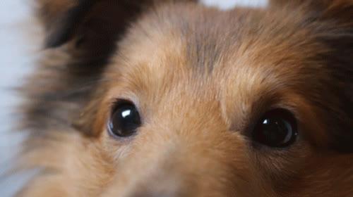 dog, puppy, wink, Dog Wink GIFs