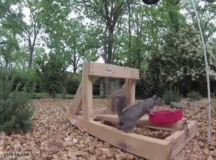 Squirrel GIFs