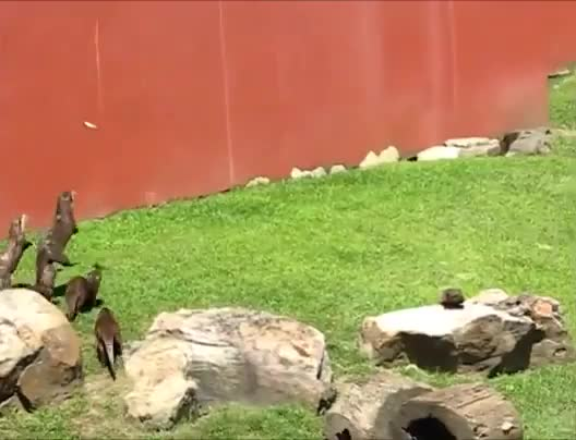 Watch and share Otter GIFs by tothetenthpower on Gfycat