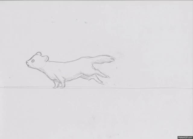 Watch Ferret Run Cycle GIF on Gfycat. Discover more related GIFs on Gfycat