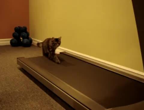 kittens, Treadmill Kittens GIFs