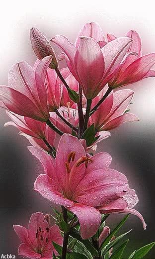 Watch and share Фото Цветов Блестящие. Красивые Живые Цветы Gif. GIFs on Gfycat