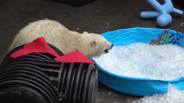 Watch and share Oregon Zoo GIFs and Nora GIFs by GrindTV.com on Gfycat