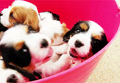 puppies GIFs