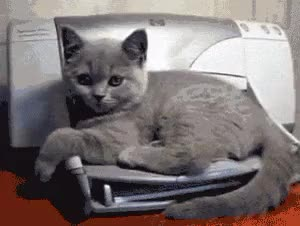 Watch and share Surprise Kitten GIFs on Gfycat