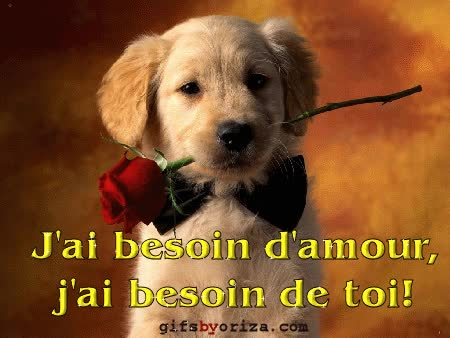 Watch and share Chien Avec Rose Rouge GIFs on Gfycat