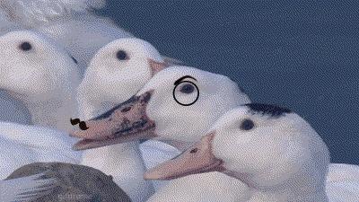 gifextra, duck evil monocle mustache GIFs