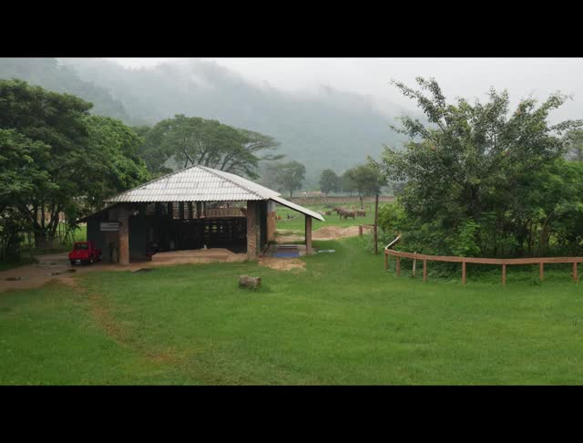 Watch elephants in the rain GIF by @cinemagraphs_n_cats on Gfycat. Discover more cinemagraph, elephant nature park, elephants, rain GIFs on Gfycat