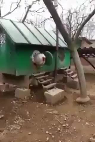 Watch and share Rooster GIFs by tatdaddy504 on Gfycat