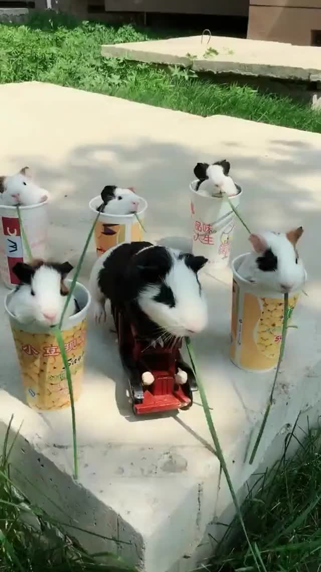 Watch and share Enjoying The Weather.  GIFs by LimeLights  on Gfycat