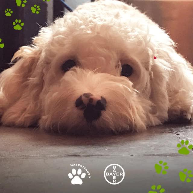 Watch and share Mascoteando GIF03 GIFs on Gfycat