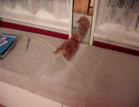 kitten, mirror, kitten mirror GIFs
