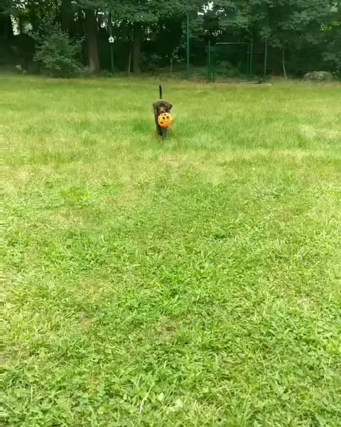 Watch and share Moose May Be A Little Clumsy But He Is Trying His Best GIFs by teistom on Gfycat