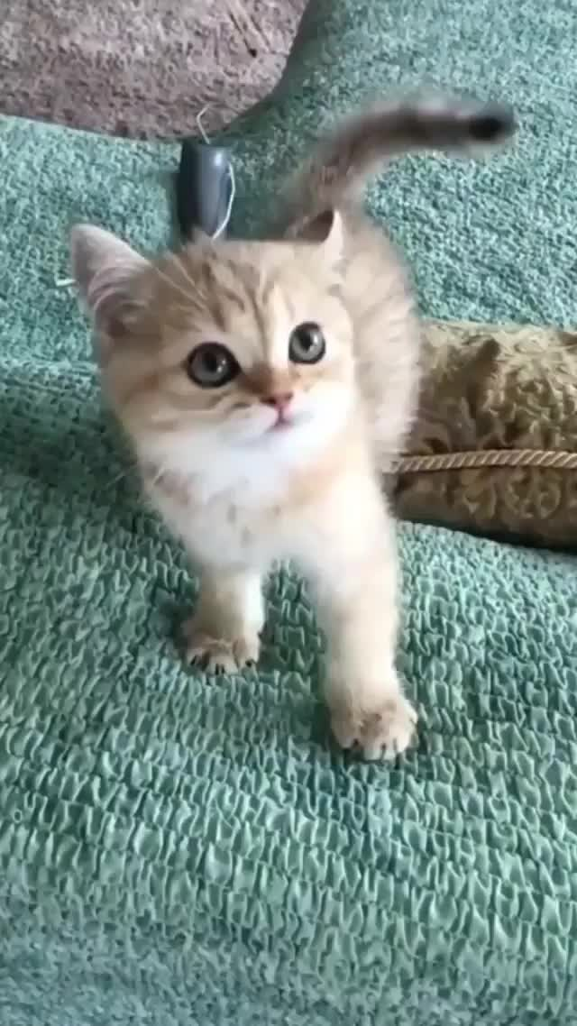 Watch and share Kitten GIFs and Kitty GIFs by gretta on Gfycat